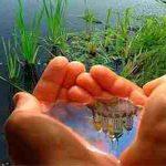 معارف نت: نقش آخرت گرایی در رابطه انسان و محیط زیست از دیدگاه نهج البلاغه